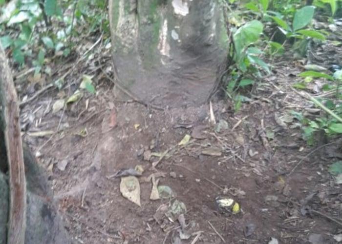 Ejército desactiva mina antipersona instalada por el ELN en Arauca