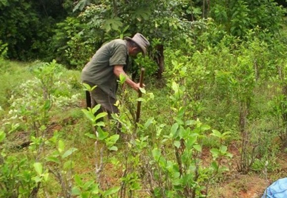 Declaración de cultivadores y trabajadores de coca, marihuana y amapola