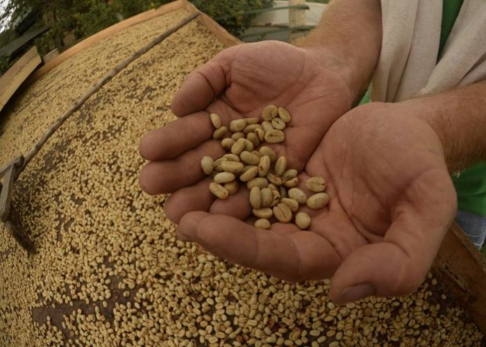 Planadas recibirá la primera feria de cafés especiales en el Tolima