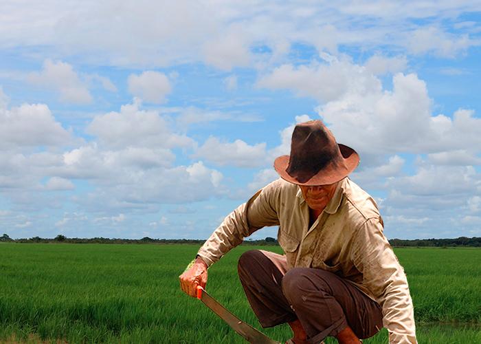 La vida de los campesinos, que empresarios y políticos quieren arrasar con las Zidres