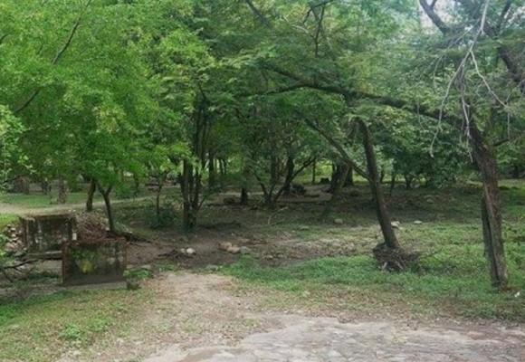Nadie puede podar árboles en Yopal