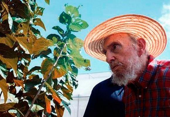 La hierba que mantiene vivo a Fidel Castro