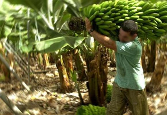 Terror en la Zona Bananera: asesinan a reclamante de tierras