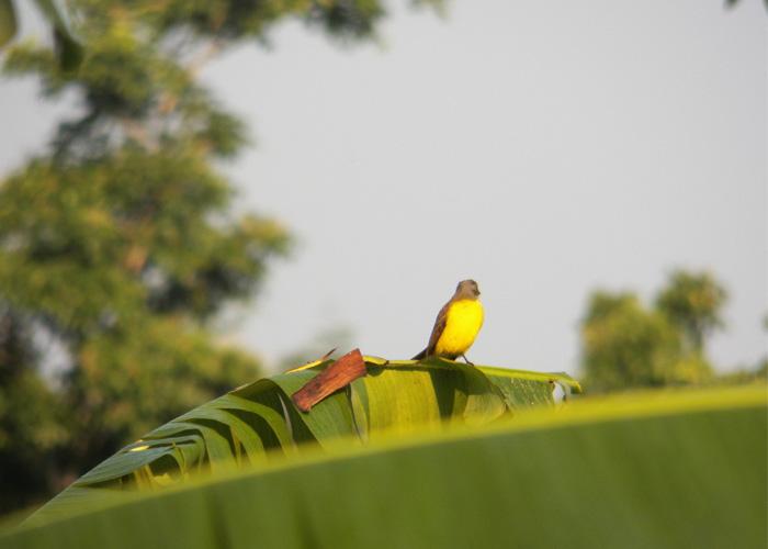 Las aves del Amazonas: un espectáculo en vía de extinción