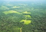 Se conforma la región administrativa y de planificación de la Amazonía