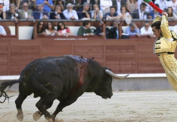 ¡No a la Tauromaquia, sí al toro!
