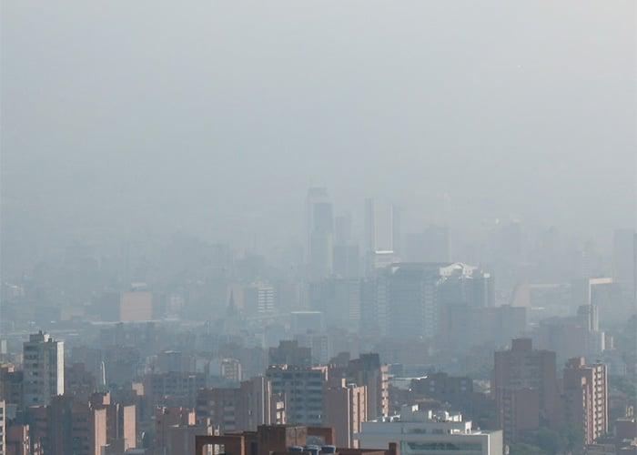 Medellín: la ciudad del animal