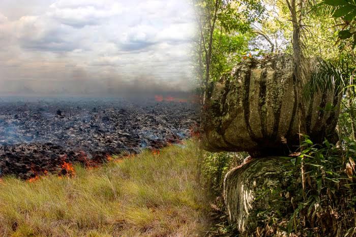 Lo que se llevaron las llamas en el Parque Natural de El Tuparro en el Vichada