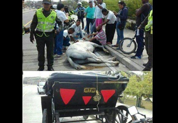 ¡Infamia! Colapsó por millonésima vez un martirizado caballo cochero en Cartagena