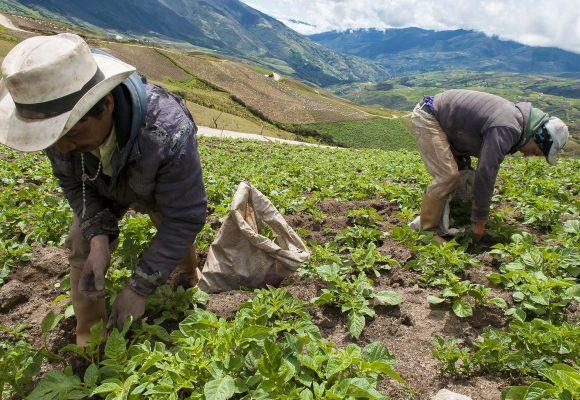 ¿Quién empezará a sembrar la semilla de la reforma agraria en 2018?