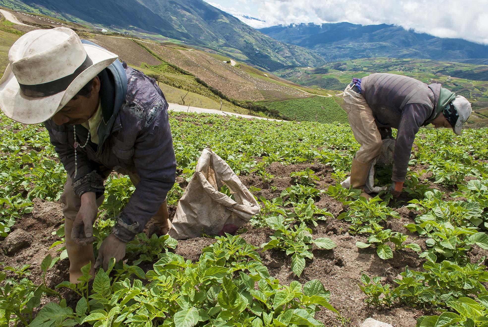 Qui n empezar a sembrar la semilla de la reforma agraria for Plantar hortensias semillas