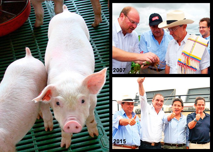 La Fazenda: el megacriadero de cerdos en los Llanos al que le apostaron Uribe y Santos