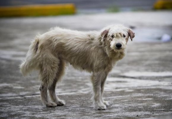 La crisis de los animales callejeros en Cali