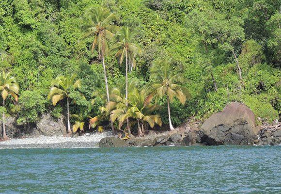 Gorgona, una vergüenza de Parques Nacionales Naturales de Colombia