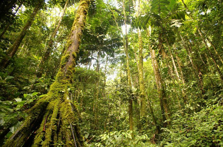 ¿Sigue en duda la existencia de grupos ilegales a la sombra de la selva del Putumayo?