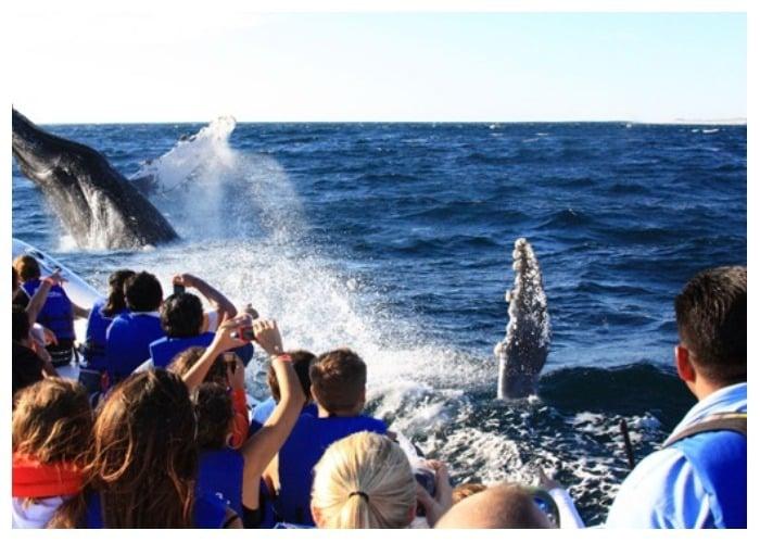 Comienza temporada de avistamiento de ballenas en Juanchaco y Ladrilleros
