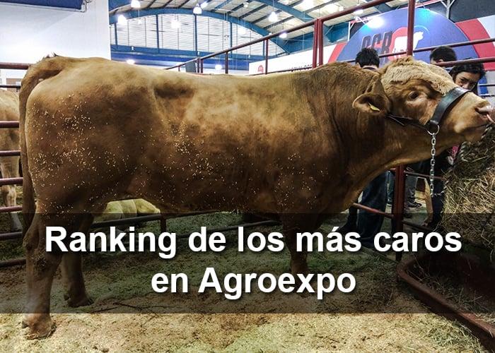 Los animales más caros de Colombia en Agroexpo