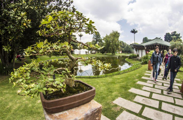 La cultura japonesa se toma el Jardín Botánico de Bogotá con la exposición de Bonsái