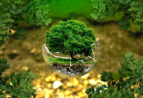 Autoridades ambientales regionales: menos recursos, más funciones