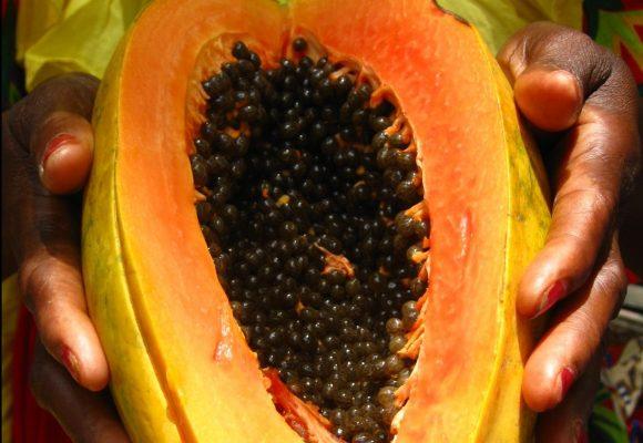 La papaya, el fruto de la corrupción colombiana
