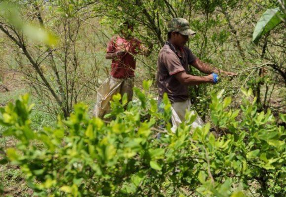 La lucha del campesinado en Colombia