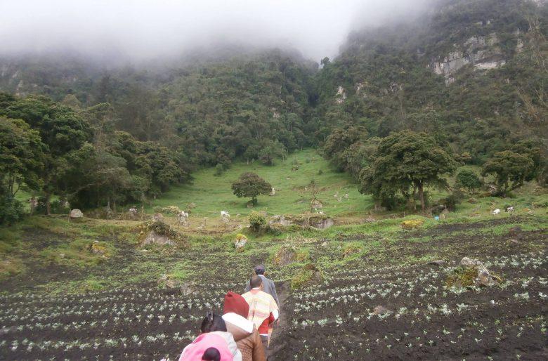 Mujeres en Usme se organizan con propuestas agroambientales