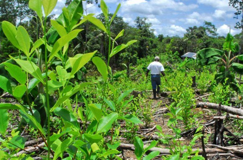 Cultivos ilícitos y la urgencia de erradicarlos