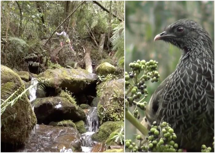 VIDEO: Quebrada La vieja, la posibilidad de respirar aire puro en pleno Bogotá