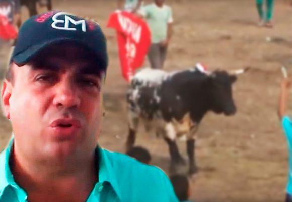 Cría de toros bravos para las corralejas, el otro negocio de Musa Besaile