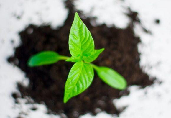 Existen alternativas para la mejora ambiental