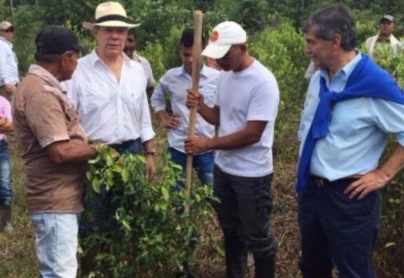Cocalombia: ¿vamos camino a la legalización de la coca?