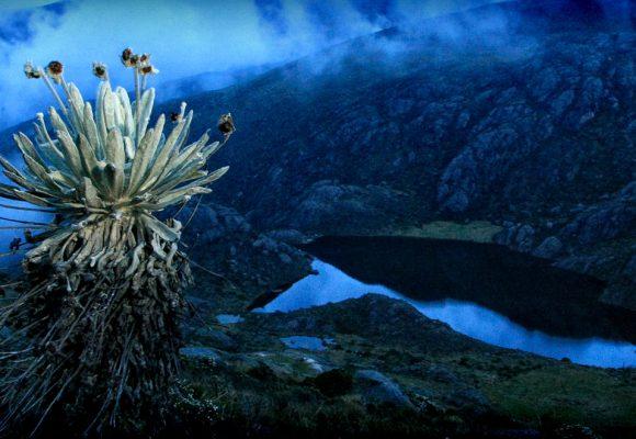 La obsesión minera y el páramo de Santurbán