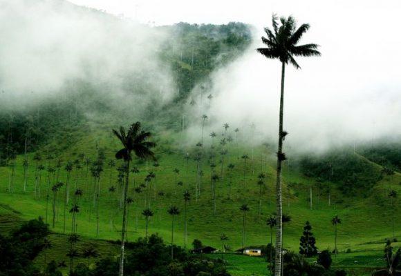 En Quindío tres municipios repudian la megaminería