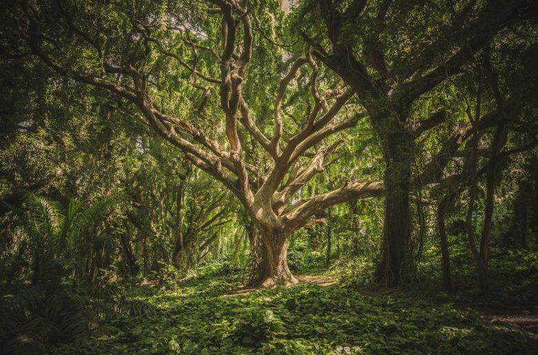 Sobre el día de la ecología, la importancia de la información y las travesuras de Monsanto