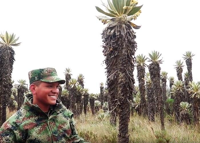 VIDEO: Los soldados que dejaron la guerra, ahora siembran frailejones