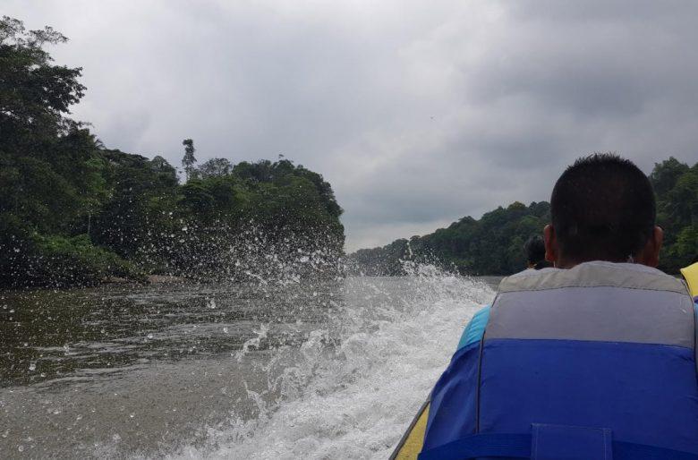 VIDEO: Recorrido hasta el Tandil, uno de los lugares donde la coca crece mejor