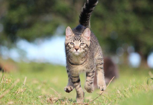 No se pueden repetir casos como el de Milagros, la gata a la que le acuchillaron la cara