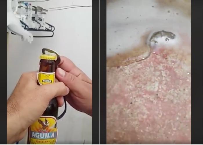Denuncia ciudadana de una Cerveza Águila con una largatija muerta: Bavaria dice que es un montaje