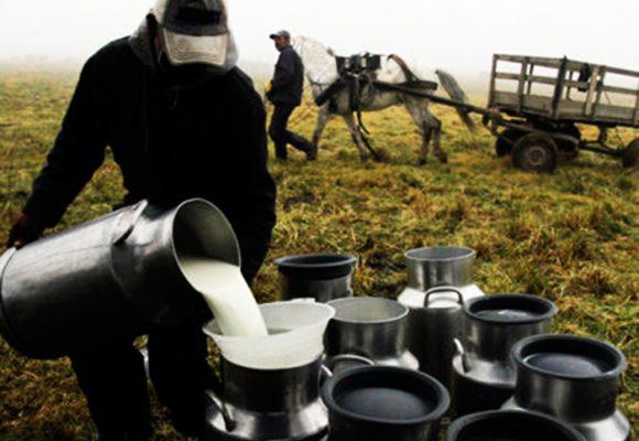 La investigación que acabaría con el desperdicio de leche en la Sabana de Bogotá