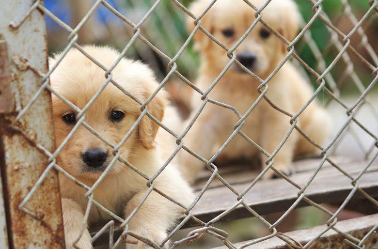 La tienda de mascotas, el principio del sufrimiento de muchos animales