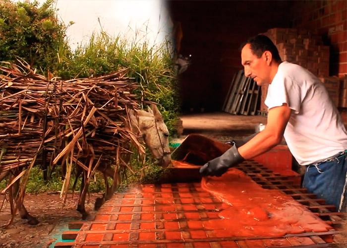 VIDEO: La panela en Santander se resiste a desaparecer