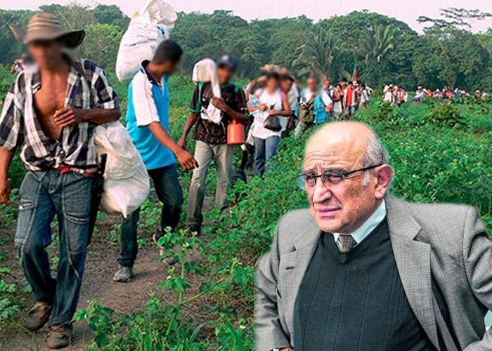 Duro golpe a Efromovich: la devolución de 1.500 hectáreas de palma a 64 familias campesinas