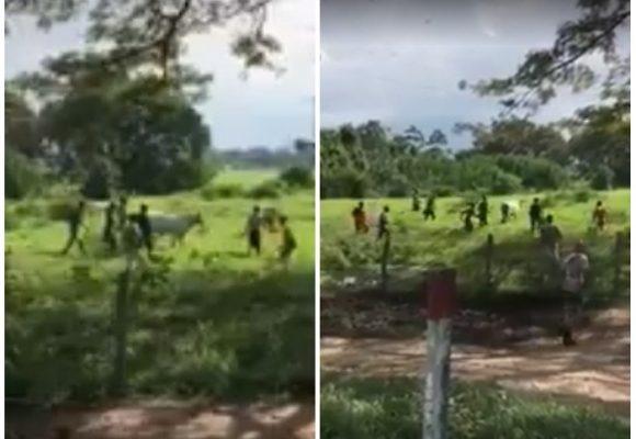 """""""Tenemos hambre, no joda, tenemos hambre"""": Una decena de venezolanos mató una vaca a palo"""