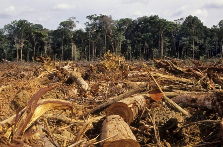 El encanto del Caquetá se desvanece ante la deforestación