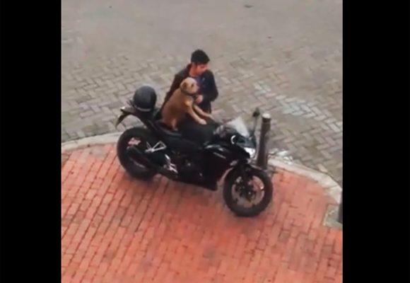 VIDEO: El perro motociclista en Bogotá que inundó las redes sociales