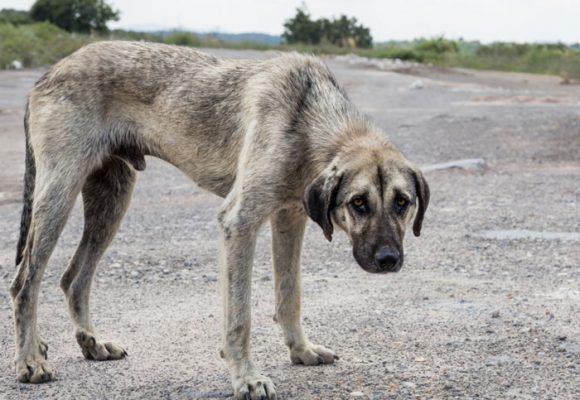 Qué pasa con el exterminio de animales en Pitalito