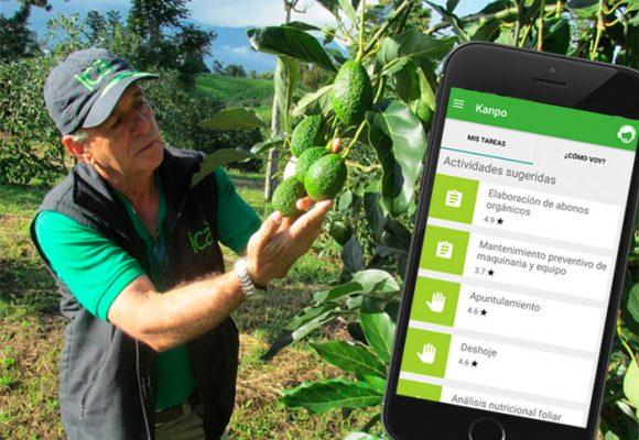 Aguacates y la aplicación que puede convertir el campo colombiano en una mina de oro