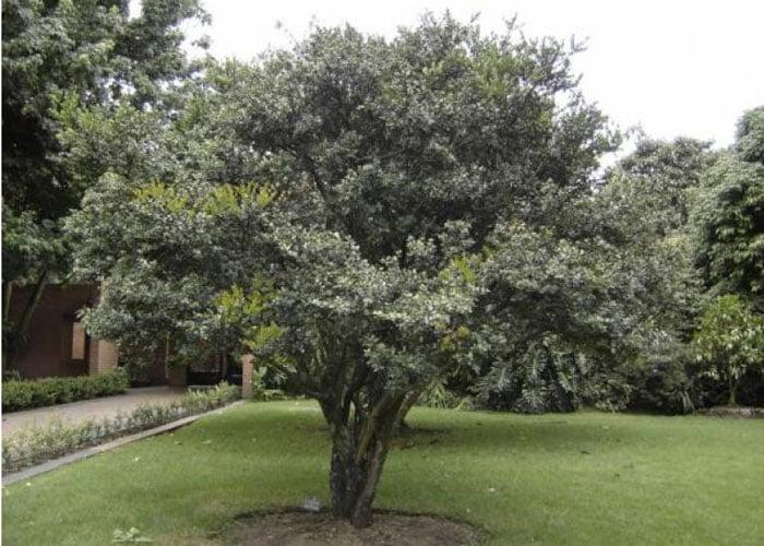 205 años del árbol de la libertad