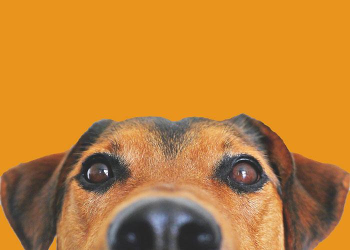Naranja, el color de la prevención contra la crueldad animal en abril