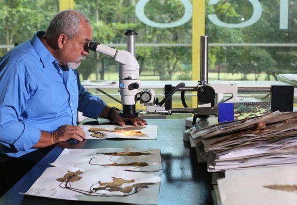 Álvaro Cogollo Pacheco, entre la ciencia, la botánica y el vallenato